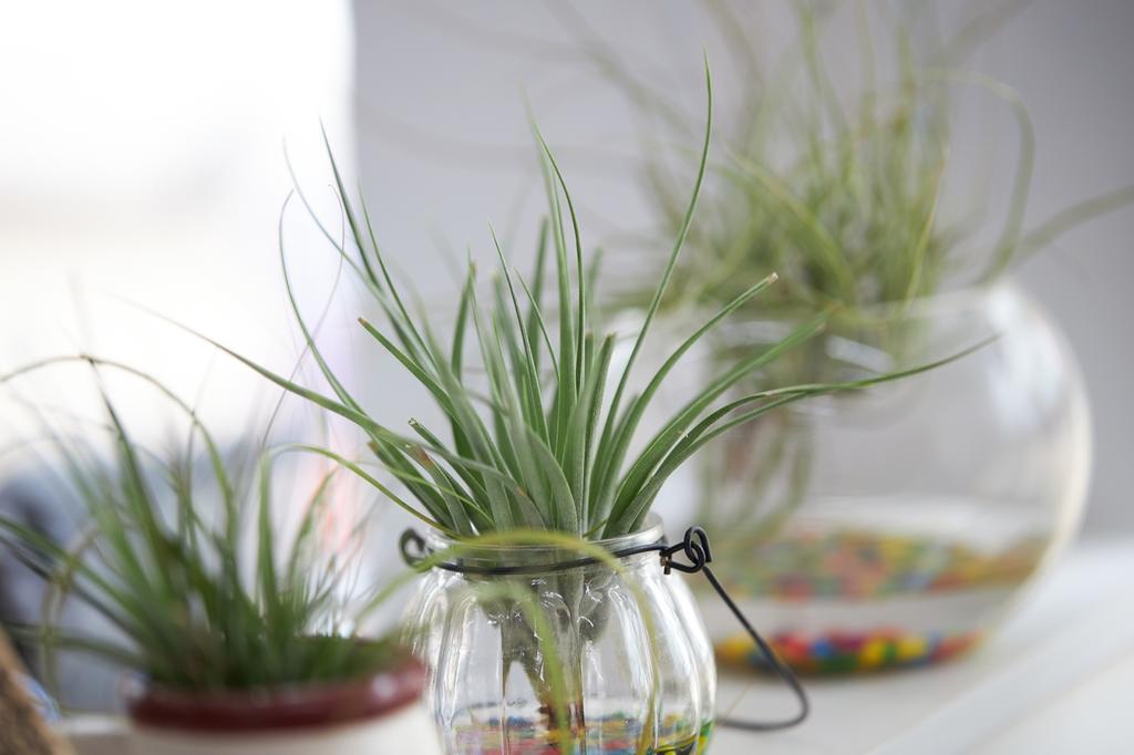 绿色植物真的能防辐射吗?被真相惊呆了!